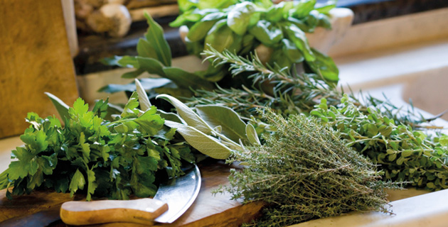 Grüne Lust – Kräuter, die gesunden Aromengeber