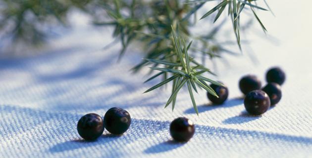 GINnovationen – die Renaissance des Gins, Teil 1