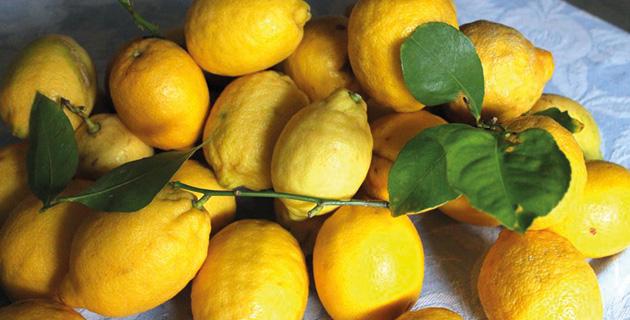 Glückliche Zitronen – Limoncello von Anna L. Deeg