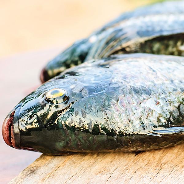 Die Haut des Fisches verrät viel über seine Frische