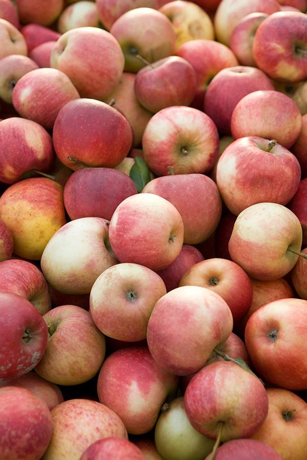 Nicht nur vergorener Traubensaft weiss Speisen stilvoll zu begleiten. Die Vielfalt an hochwertigen Apfelweinen wird immer grösser.