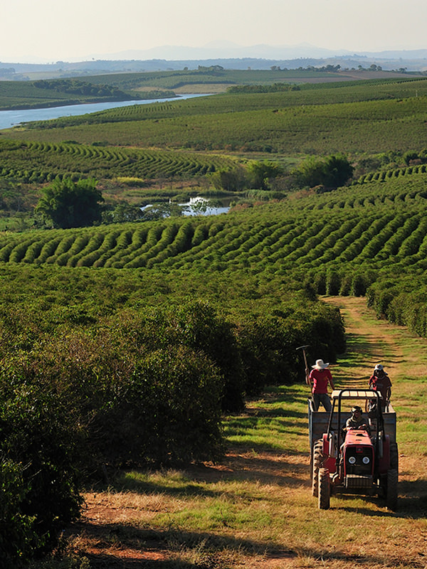 Kaffeeplantage in Brasilien