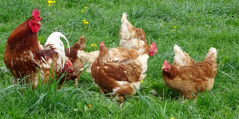 Das Bauernhofmodell – Frühling bei Familie Hug