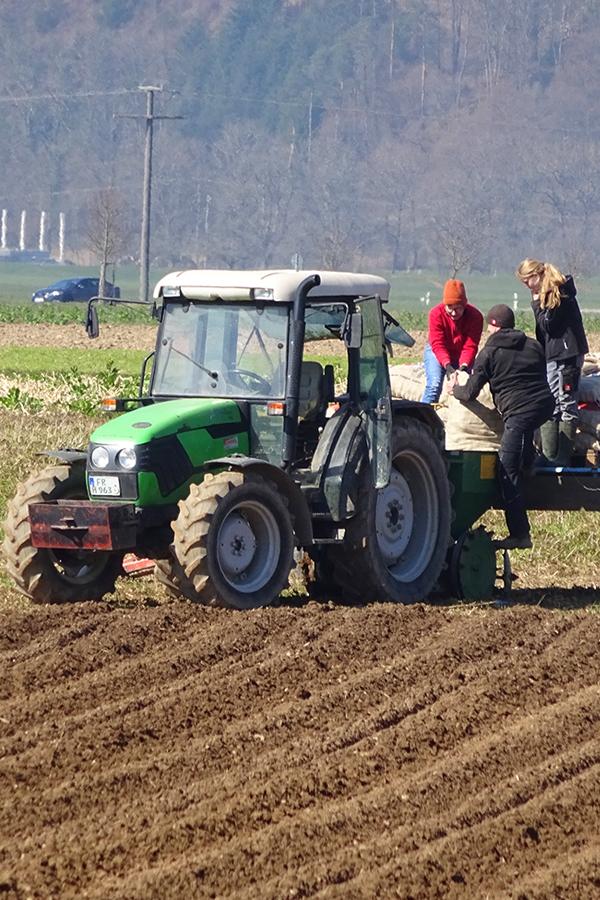 Aussaat der Frühkartoffeln Ende März