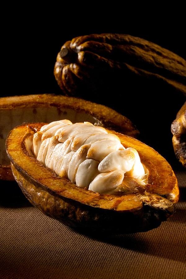 Eine geöffnete Kakaofrucht - bis zum Schokoladengenuss ist es noch ein langer Weg
