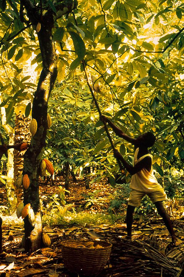 Verantwortung als Grundprinzip - das geht auch ohne Fair Trade-Siegel