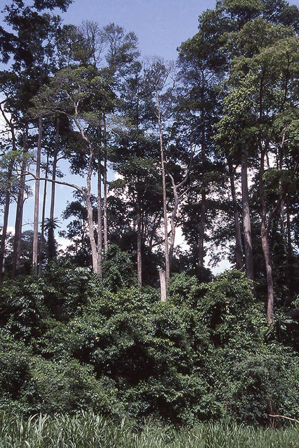 Geschützt von höheren Bäumen, sogenannten