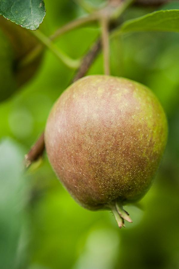 Landwirtschaft - für Biolandwirt Messner ein geschlossenes System