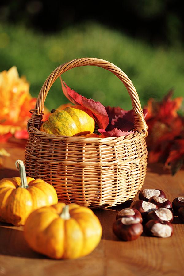 Herbstgemüse, wie Kürbis, Artischocke und Feldsalat bringt Energie