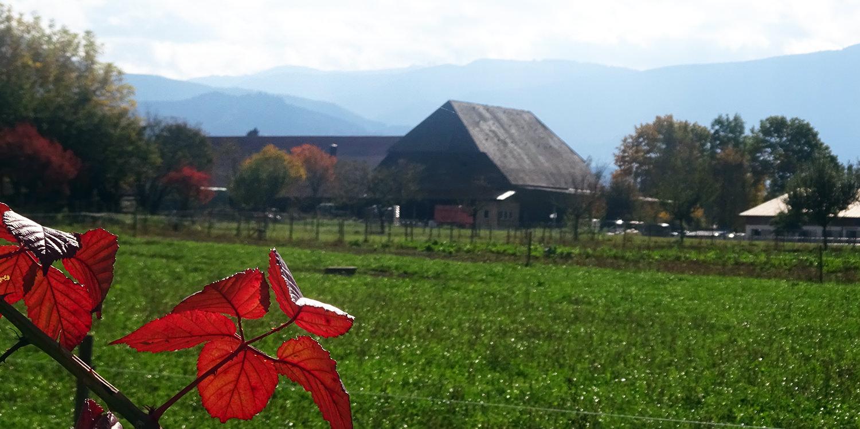 Das Bauernhofmodell – Ein goldener Herbst