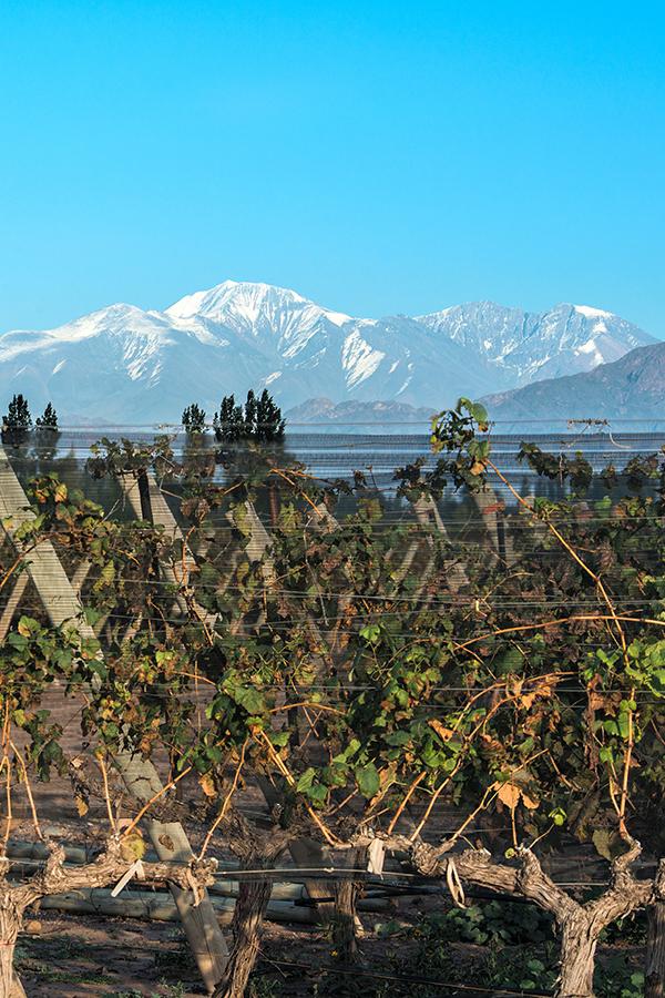 Weingut in der Provinz Mendoza, Argentinien