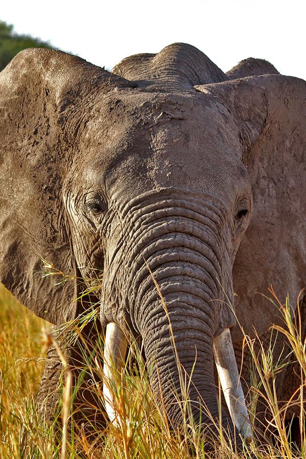 Hautnah dabei sein bei einer Safari
